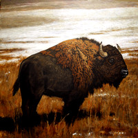 young bison | acrylic on canvas | 36 x 36 • SOLD • giclee available